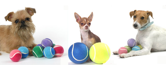 Does Your Dog Have a Favorite Tennis Ball Size?