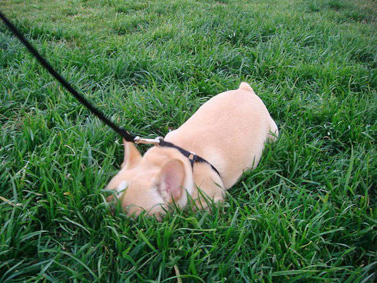Growing Up Samson: First Walk on the Wild Side!