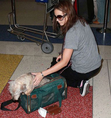 Found! Leighton Meester's Doggie Bag
