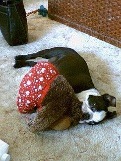 Do Tell: Do Your Dogs Nurse?