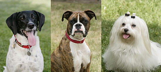 Who Do You Want to Win Greatest American Dog?