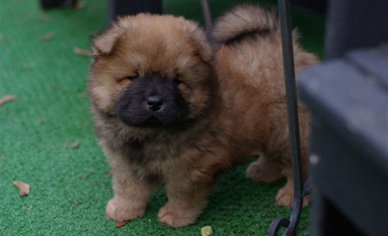 New Puppy Alert! Martha Stewart Names Ghenghis Khan
