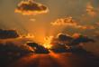 Seeking the sun.......