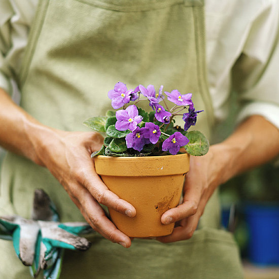 Casa Quickie: Steer Your Plants Clear of Heat