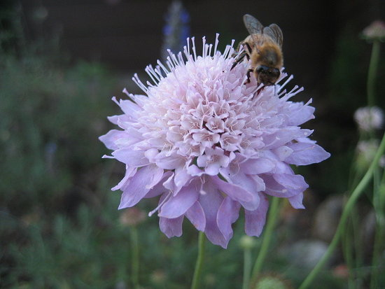 How-To:  Say Welcome Home to Honeybees