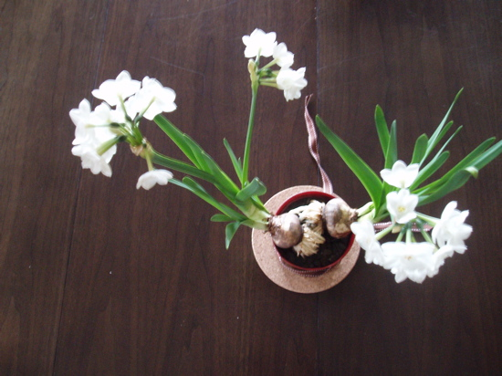 Casa Quickie: Extend Your Forced Bulb Blooms