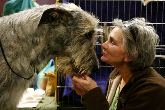 Sugar Shout Out: Highlights From the Westminster Kennel Club