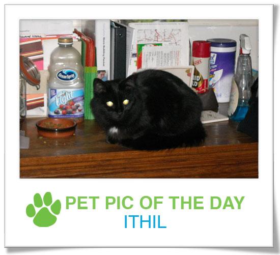 Pet Pics on PetSugar 2009-04-08 09:30:22