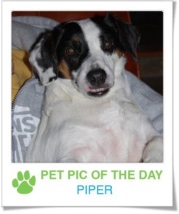 Pet Pics on PetSugar 2009-04-24 09:00:38