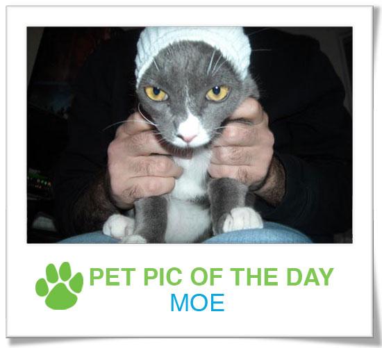 Pet Pics on PetSugar 2009-04-22 09:00:47