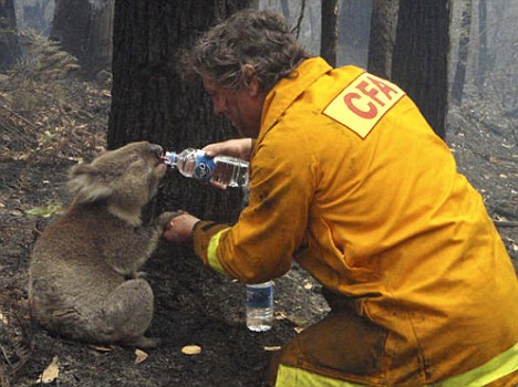 Video of Firefighter Giving Thirsty Koala Water