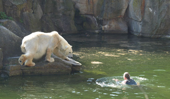 Quick-Thinking Zookeepers Save Woman From Hungry Bears