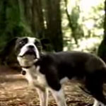 Readers' Choice: Best Commercial Featuring an Animal?