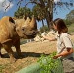 Amount of Ear Hair the Key to Rhino Identification?!