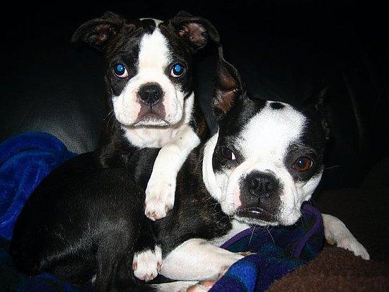 Marley & Mia