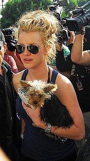 Pets and Paparazzi