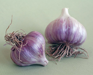 Garlic: Does it Repel Mosquitoes