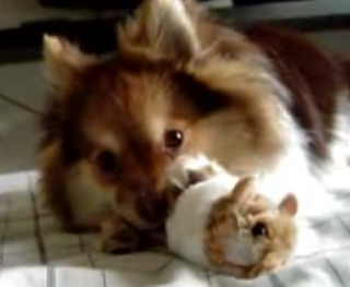 Dog Hearts Vibrating Hammie
