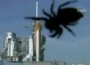 When Spiders Attack!