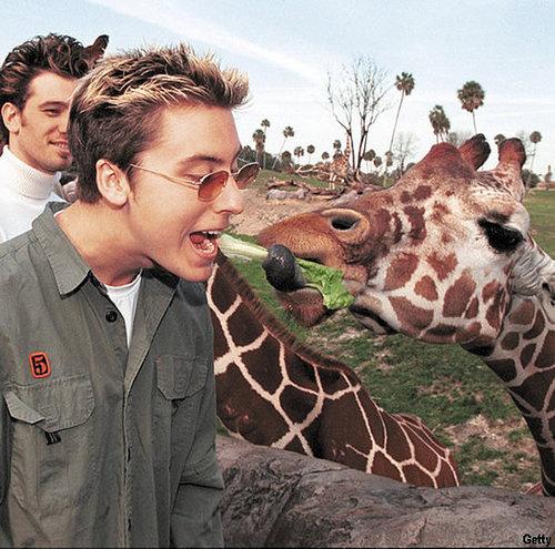 Caption Me: Lance Bass with a Giraffe!