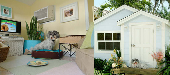 Doggie Mansions: Spoiled Sweet or Spoiled Rotten?
