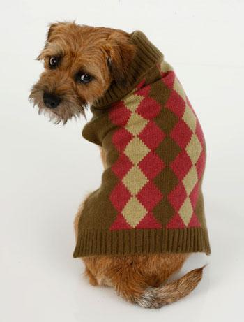 Trend Setters: Preppy Pets Rock... Argyle