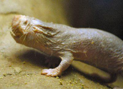 mole3