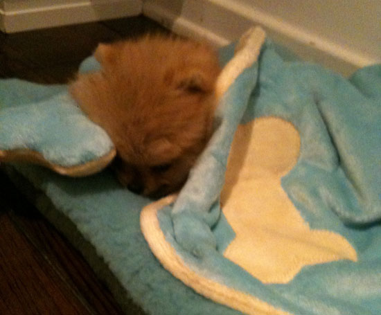 Kelly Osbourne's New Dog Died