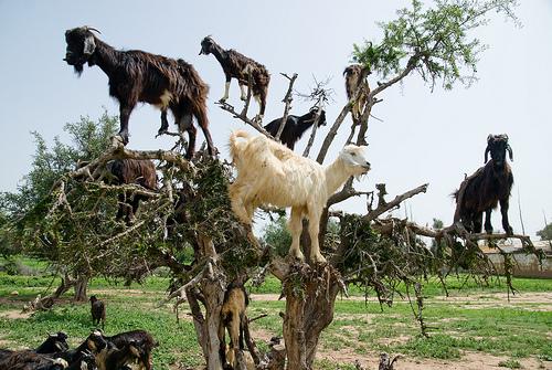5a33ca364012190d_lisa_goats.jpg