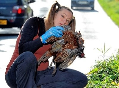Mom-To-Be Craves Roadkill