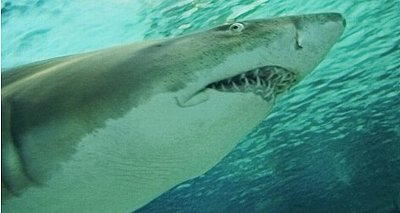 Florida Mom Wrestles Down a Shark to Save Daughter (VIDEO)