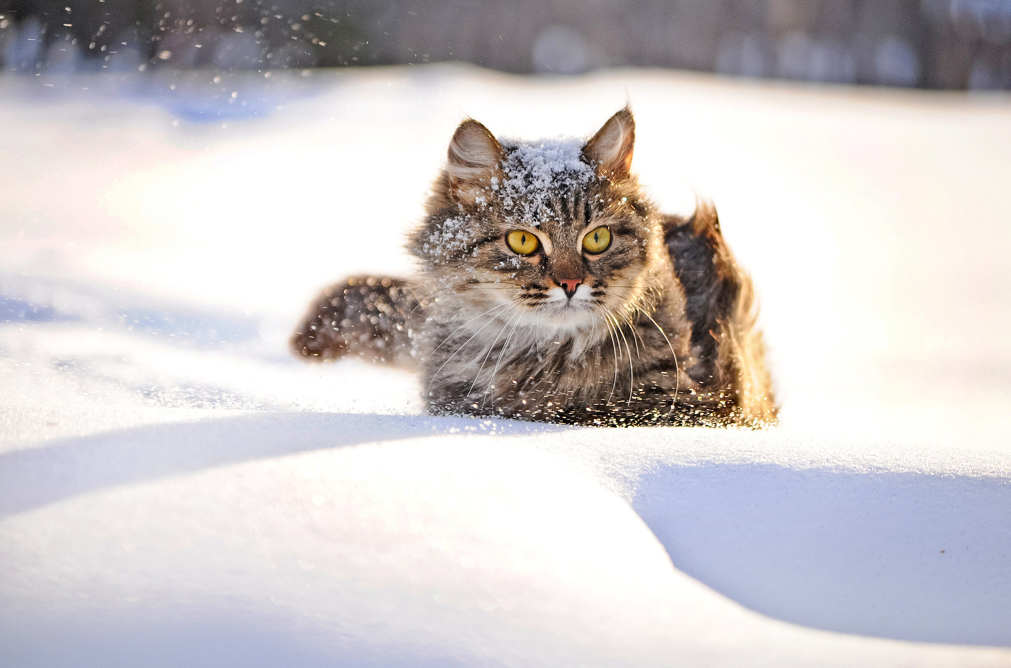 Obninsk Russia  city photos : Obninsk Cat Saves Abandoned Baby From Freezing | POPSUGAR Moms