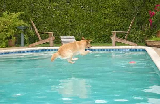 Would You Let A Dog Swim In Your Swimming Pool Popsugar Home