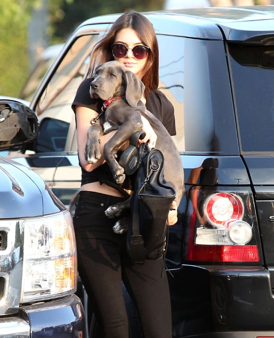 Kendall Jenner S Dog Blue Breed