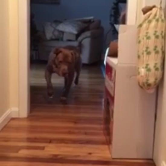 Dog Walking On Tiptoes