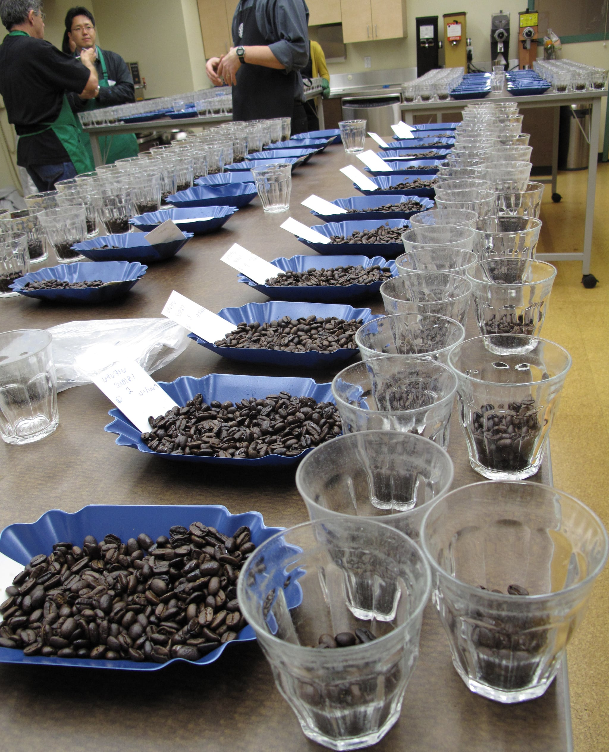 The long line of coffees waiting to be tasted by the Starbucks Coffee team.
