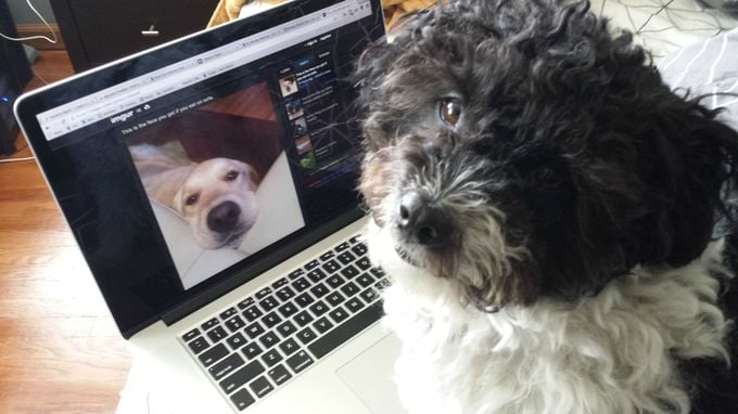 Imgur, the Holy Grail of Cute Animals, Now Has a Site For Pets — at Least For April Fools'