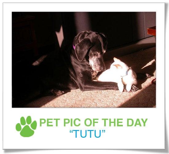 Pet Pics on PetSugar 2009-01-05 09:30:00