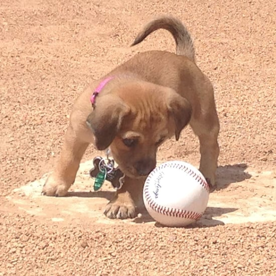 Puppy Abandoned at a Baseball Field Gets Adopted